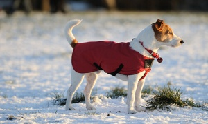 Tips for Winter Dog Walks